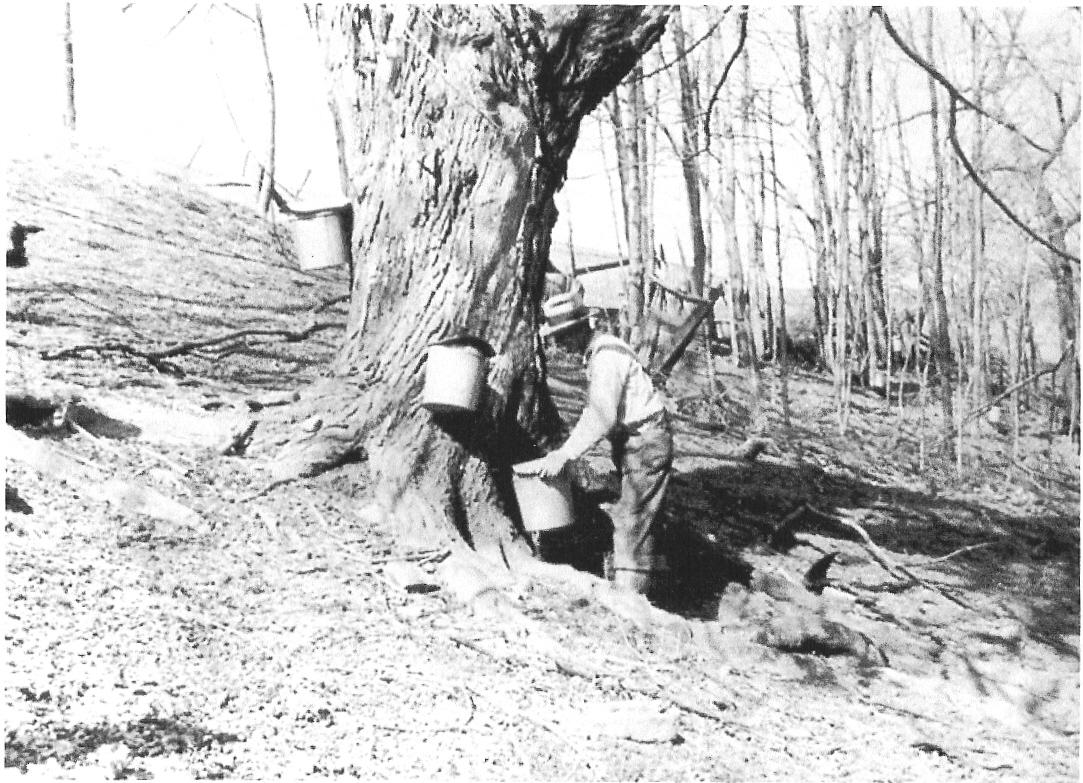 Lester Korns gathering sugar water, Southampton Township, Somerset County, PA