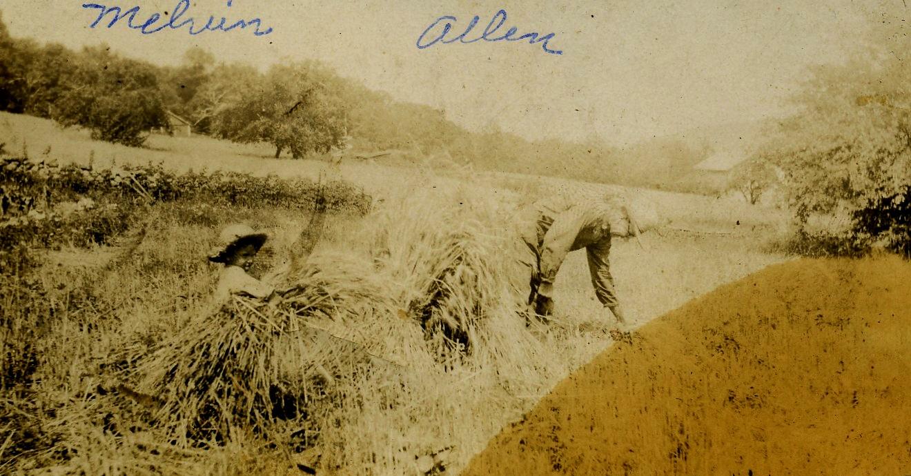 Allen Korns harvestng grain.