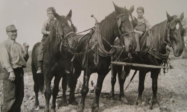 Allen Korns with horse team.
